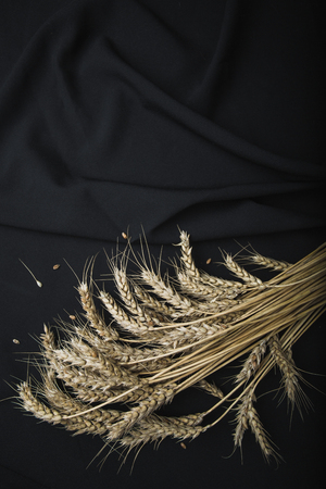 selective focus. Ears of wheat lie on the background of black fabric. Agrarian still life. Top view concept for designers Stok Fotoğraf