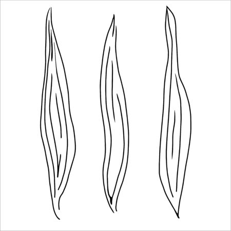 Black line leaves sketch on white background. Hand drawn simple narrow leaves illustration. 일러스트