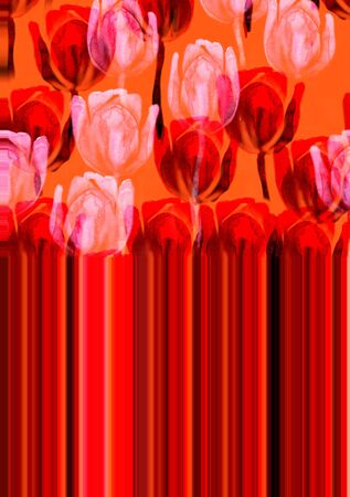 Watercolor red and light pink tulip flower illustration on orange. Abstract trace background.