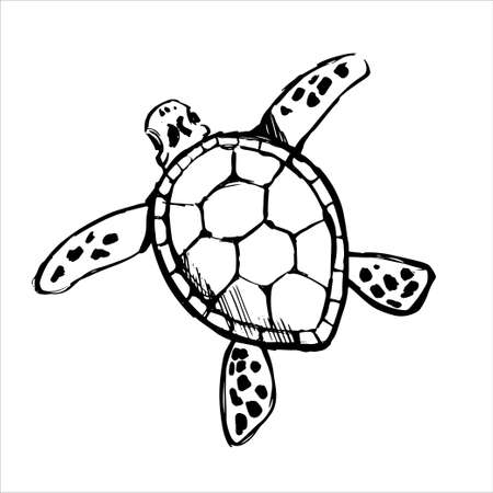 Sea turtle black line sketch on white background. Wild tropical ocean animal.