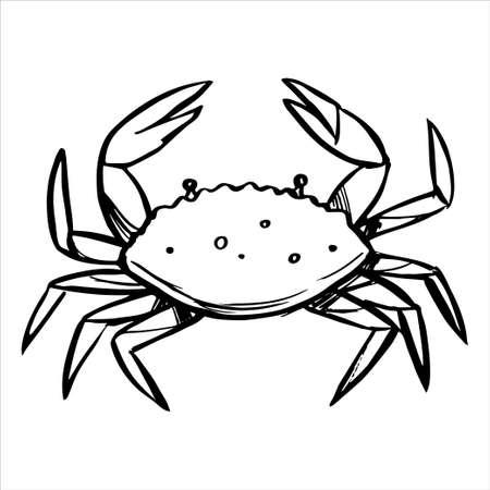 Sea crab sketch. Black line sketch on white background.