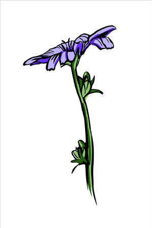 Chicory purple flower sketch. Hand drawn vector illustration isolated on white background. Ilustracja