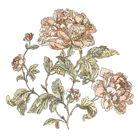 rose garden: Elegance Seamless pattern with flowers roses, floral illustration in vintage style Illustration