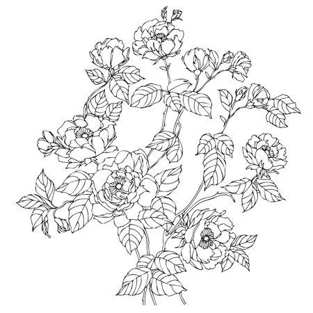 eglantine: Flowers roses, floral vector illustration in vintage style