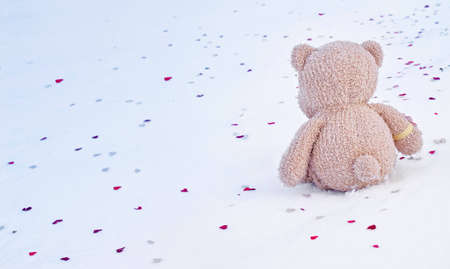 The small bear sits on snow
