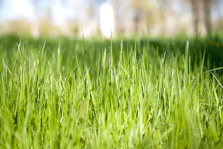 beautiful green grass in city park Stock Photo