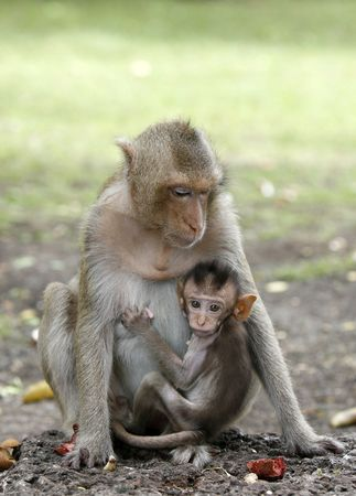 mother and son monkeys in a park photo