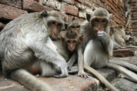 monkeys familly in a park at Asia photo