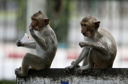 two monkeys  in a park at Asia photo