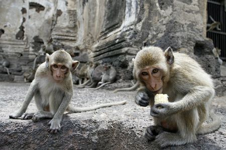 monkey friends in a park at Asia photo