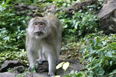 a monkey in a jungle at north Thailand photo