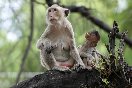 monkeys familly in a historical park at Asia photo