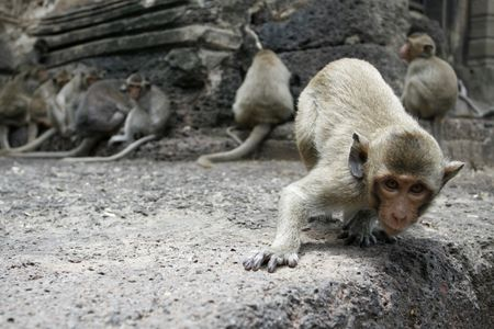a curious monkey in a temple at Thailand photo