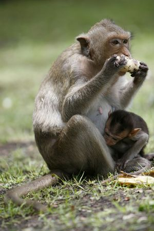 dearness: monkey in a historical park at Asia