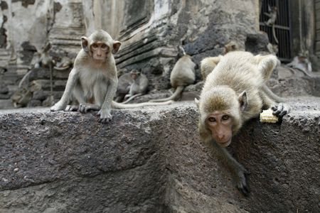 curious monkeys  in a park at Asia photo