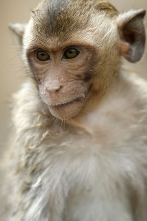 dearness: a smart monkey in a historical park at Asia Stock Photo