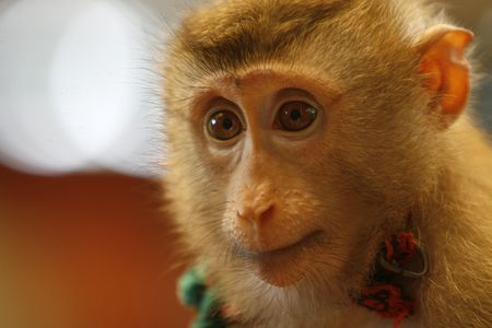 un mono inteligente en un show en un zoológico Foto de archivo - 3505919