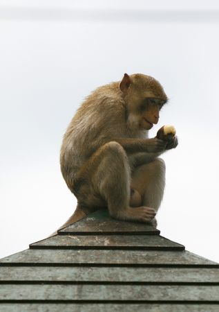 dearness: a beautiful monkey at rhe top of a roof