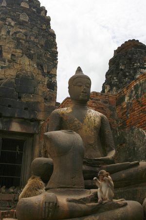 orison: monkeys  in an old city in Thailand  Stock Photo
