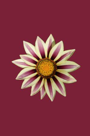 florets: a flower over a purple background