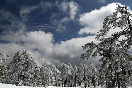 eos: a snow landscape at troodos mountain in Cyprus