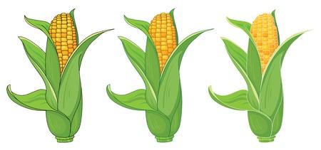 elote caricatura: ilustración de una colección de maíz Vectores
