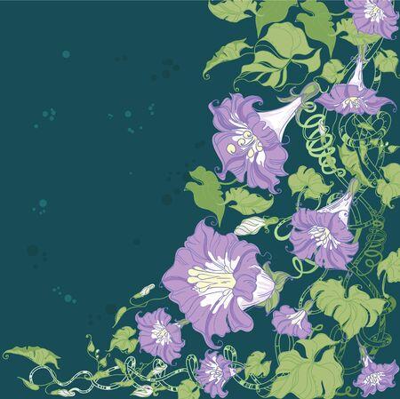 convolvulus: illustration of a convolvulus flowers card