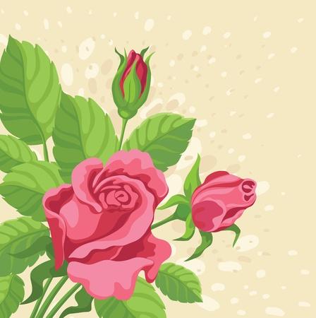 rose-bush: ilustracja rysunek ręka tle róż