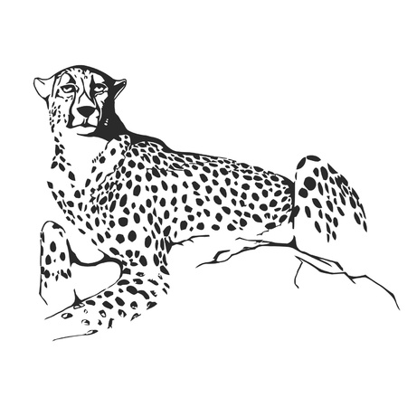 Lady-cheetah Vector