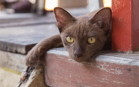 clawing: Brown cat lying on the ground beside a wooden pole red.