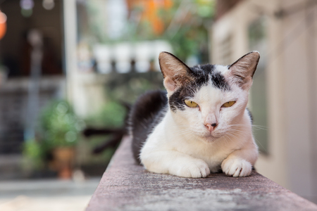 Black and white cat sleeping on the fence of the house, in the outdoor informed. Stock Photo