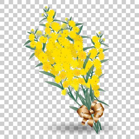 Yellow mimosa flower branch symbol of spring isolated on transparent background. Vector nature illustration Illustration