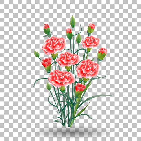 red carnation flower, green stem, leaves on transparent background, collection for Mother s Day, victory day, digital draw, vintage illustration, watercolor style, vector