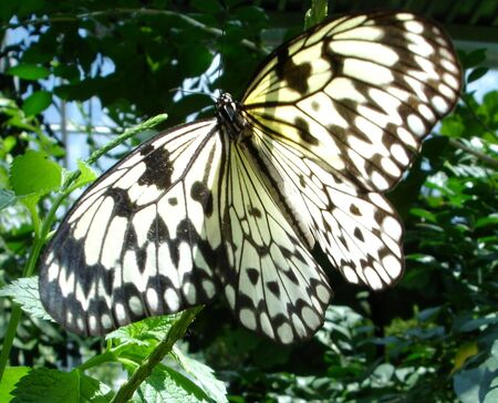 feasting: Feasting Butterfly