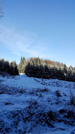 shadowed: Winter view of the shadowed forest