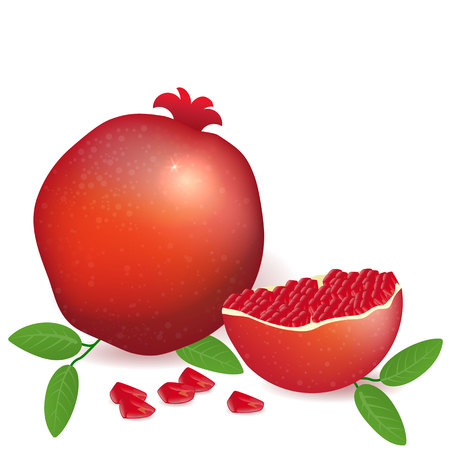 Vector illustration pomegranate full and sliced ??fruit.Healthy full of vitamins vegetarian fruit. Greeting card, logotype, background for template web and print. Illustration