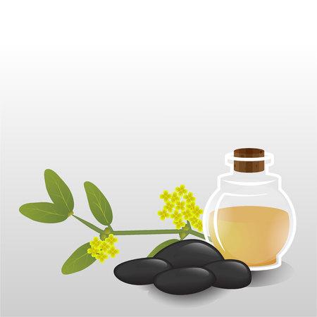 Simmondsia chinensis, Jojoba oil glass bottle, essential oil aromatherapy, hair care, skin care, neutral therapy.Health care alternative medicine.