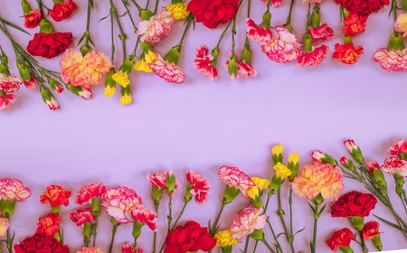 Blue background with carnations flowers and copy space. Top view. Mother's Day background.