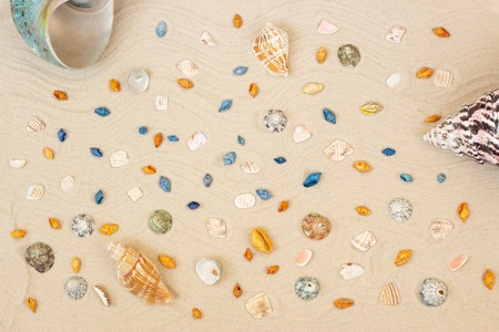 sea shells with sand as background. Summer wallpapers