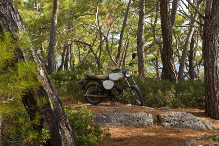 Motor bike parked in middle of pine forest