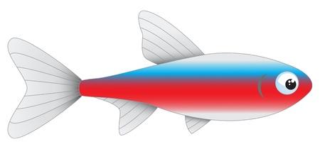 tetra fish: Aquarium fish