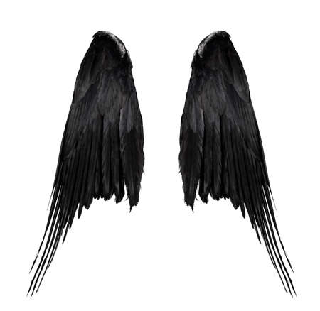 two big black raven wings with big feathers isolated on white background, closeup