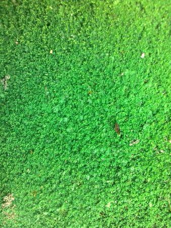texture: Texture moss Stock Photo