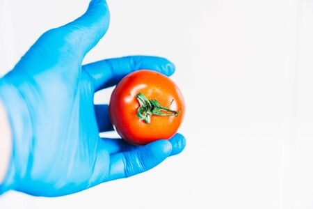 Hand washing a red tomato with blue latex gloves. Disinfecting the fruit to prevent the spread of the coronavirus.