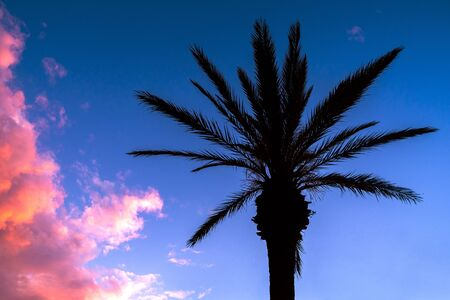 Tropical landscape in hawaii with coconut palm tree silhouette and pink clouds at dusk. Tropical caribbean travel destination in summer. Banque d'images