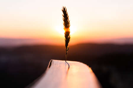 Inspiration and creativity concept. Wheat spike with the warm sun rays of sunset or sunrise with a novel book. Books and reading as a source of imagination and dreams. Banque d'images