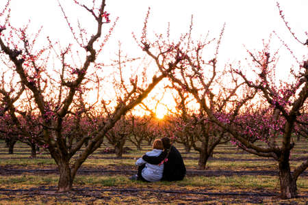 Embracing couple sitting in a field of colorful blooming fruit trees watching the sunset. Peach trees in spring with pink flowers and sun rays in spring. The good weather is here. Love is in the air.
