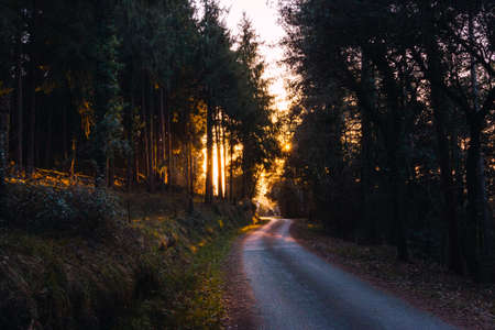 Empty winding asphalt road surrounded by pine trees with the warm golden light of sunset or sunrise in the background. Mountain road.