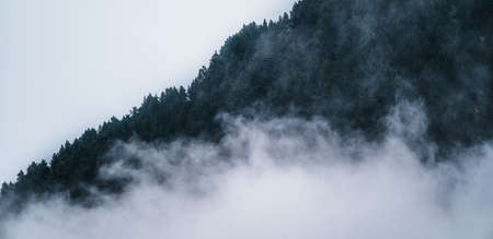 Misty foggy mountain landscape with fir forest trees and copyspace in gloomy morning atmosphere. Pine trees, dark tone, vintage and retro style.