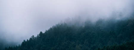 Panoramic view of misty foggy mountain landscape with fir forest trees and copyspace in gloomy morning atmosphere. Pine trees, dark tone, vintage and retro style.